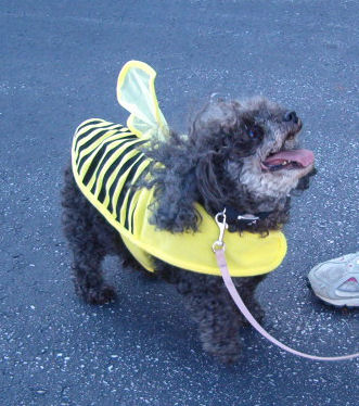 This Bumblebee kept kissing Ma