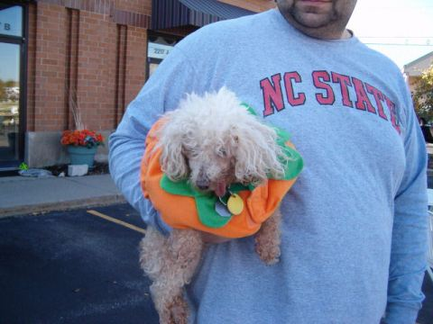 This poodle was so old he barely could see anymore but still came for a fun time