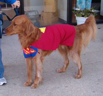 There was a superdog